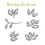Wektorowy kwiecisty z liśćmi, gałąź, roślina elementy ilustracja wektor