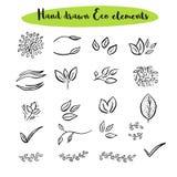 Wektorowy kwiecisty z liśćmi, gałąź, roślina elementy Zdjęcie Stock