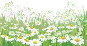 Wektorowy kwitnie stokrotka kwiatów pole ilustracja wektor