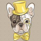 Wektorowy śmieszny kreskówka modnisia Francuskiego buldoga pies Zdjęcia Royalty Free