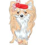 Wektorowy moda psa chihuahua trakenu ono uśmiecha się Fotografia Royalty Free