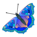 Wektorowy motyl. Fotografia Royalty Free
