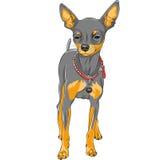 Wektorowy nakreślenie psa chihuahua traken Zdjęcie Stock