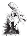 Wektorowy nakreślenie w kasku gwinei ptactwo ilustracji