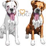 Wektorowy nakreślenia dwa domowego psa boksera traken Zdjęcie Stock