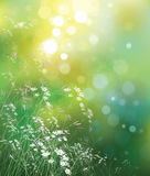 Wektorowy natury tło. Zdjęcie Stock