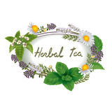 Wektorowy owalny ornament ziele i kwiaty dla etykietek Obraz Stock