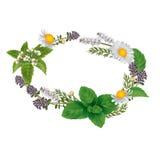 Wektorowy owalny ornament ziele i kwiaty dla etykietek Fotografia Stock