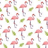 Wektorowy płaski tropikalny bezszwowy wzór z ręka rysującym dżungli monstera zasadza flamingów ptaki odizolowywających na białym  ilustracja wektor