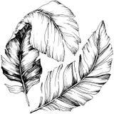 Wektorowy ptasi piórko od skrzydła odizolowywającego Odosobniony ilustracyjny element Ilustracja Wektor