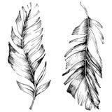 Wektorowy ptasi piórko od skrzydła odizolowywającego Odosobniony ilustracyjny element Royalty Ilustracja
