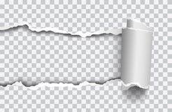 Wektorowy realistyczny drzejący papier z rollled krawędzią na przejrzystym tle ilustracji