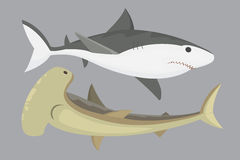 Wektorowy rekinu charakter Zdjęcie Stock