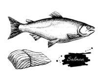 Wektorowy rocznika łososia rysunek Ręka rysująca monochromatyczna owoce morza bolączka royalty ilustracja