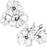 Wektorowy Rosa canina kwiat Czarny i biały grawerująca atrament sztuka Odosobniony Rosa canina ilustracji element ilustracja wektor