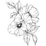 Wektorowy Rosa canina kwiat Czarny i biały grawerująca atrament sztuka Odosobniony Rosa canina ilustracji element royalty ilustracja