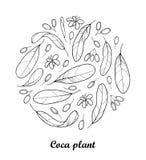 Wektorowy round skład kontur kokainy roślina lub Erythroxylum koka Ozdobny liść, owoc i kwiat w czerni odizolowywającym na bielu, royalty ilustracja