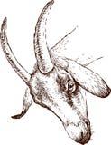 Głowa kózka ilustracji