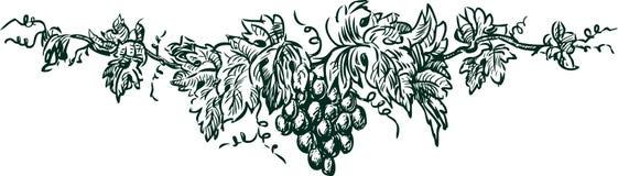 Gałąź z winogronem ilustracja wektor