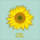 Wektorowy słonecznikowy kwiat głowy odgórny widok i oleju literowanie Fotografia Royalty Free