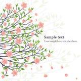 Wektorowy Sakura Obrazy Royalty Free