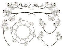 Wektorowy Storczykowy kwiatu projekt Dividers, ramy i wianki, Fotografia Royalty Free