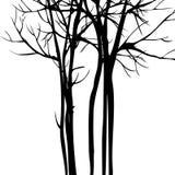 Wektorowy tło z drzewami ilustracja wektor