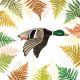 Wektorowy tło z latanie kaczką z paprociowymi liśćmi Obraz Stock