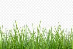 Wektorowy trawa wzór dla projekta royalty ilustracja