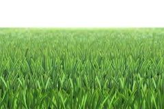 Wektorowy trawy boiska piłkarskiego tło ilustracja wektor