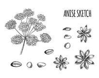 Wektorowy Ustawiający Anyżowi nakreślenia: Aniseed i kwiaty, Czarny konturu rysunek Odizolowywający ilustracja wektor