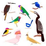 Wektorowy ustawiający australijscy ptaki ilustracja wektor