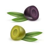 Wektorowy Ustawiający Czarnych i Zielonych oliwek gałąź z liśćmi Obrazy Stock