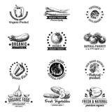 Wektorowy ustawiający etykietki, odznaki i ręka rysujący projekt, ilustracja wektor