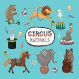 Wektorowy ustawiający kolorowi cyrkowi zwierzęta royalty ilustracja