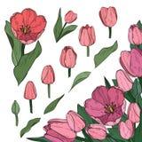 Wektorowy ustawiający kolorowi tulipanowi elementy Dekoracyjny narożnikowy element royalty ilustracja