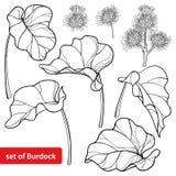 Wektorowy ustawiający lappa, liść, rzep i ziarno w czerni odizolowywającym na białym tle konturu Arctium lub, wielkiego łopianu Fotografia Royalty Free