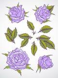 Wektorowy ustawiający róże i liście Zdjęcie Royalty Free