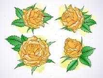 Wektorowy ustawiający róże i liście z akwarela elementami Fotografia Royalty Free