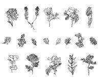 Wektorowy Ustawiający różne rośliny - dzikie, jagody, wzrastał, chryzantema i maczek z liśćmi fotografia royalty free