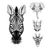 Wektorowy ustawiający ręka rysujący zwierzę nakreślenie Obraz Stock