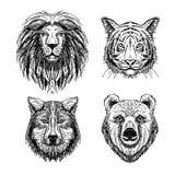Wektorowy ustawiający ręka rysujący zwierzę nakreślenie Obraz Royalty Free