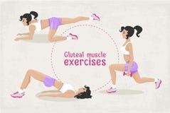 Wektorowy Ustawiający sprawność fizyczna pośladkowego mięśnia trening ćwiczy dla kobiety Zdjęcie Stock