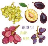 Wektorowy ustawiający z śliwkami i winogronami Obraz Royalty Free