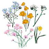 Wektorowy ustawiający kwiaty Zdjęcia Royalty Free