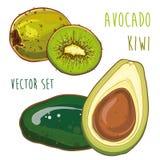 Wektorowy ustawiający z avocado i kiwi Obrazy Stock