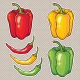 Wektorowy ustawiający z warzywami: pieprze na bielu Obraz Royalty Free