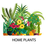 Wektorowy Ustawiający salowe drzewo domu rośliny w garnkach ilustracja Obraz Stock