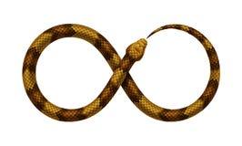 Wektorowy wąż gryźć mnie w postaci znaka nieskończoność ` s ogon ilustracja wektor
