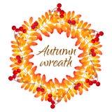 Wektorowy wianek z jesieni rowan liśćmi ilustracja wektor